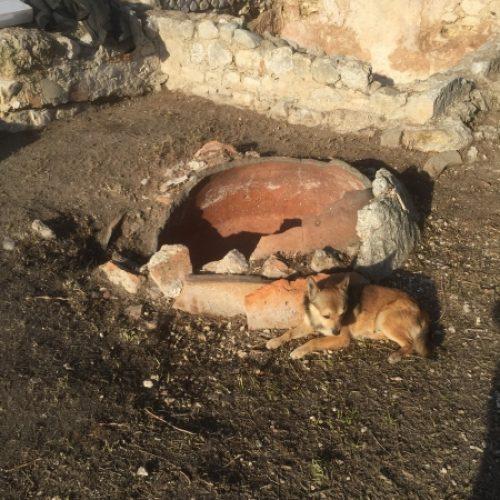 Mattinata (Fg) - Comune- Villa Romana di Agnuli dopo l'intervento-un collaboratore